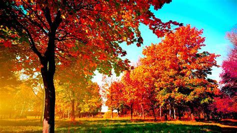 Autumn Trees - Manuela Wallpaper (41643616) - Fanpop