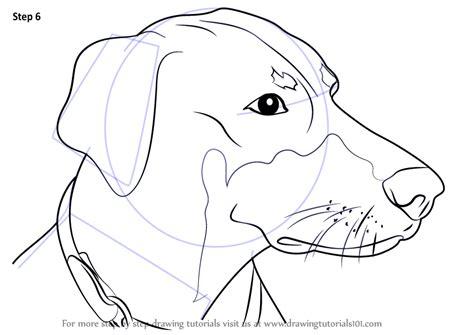 learn   draw doberman face dogs step  step