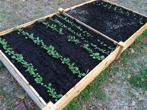 My Fall Vegetable Garden  Tallahasseecom Community Blogs