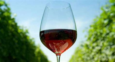 is chagne wine climate change is producing great wine vintages irish examiner
