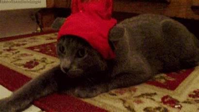 Halloween Cat Costume Scary Funny Grey Kitty