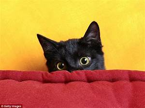 Is YOUR Cat Stressed Study Reveals How To Get Your Pet