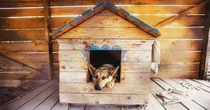 Cabane Pour Chien : niche pour chien bien la choisir pr parer l 39 arriv e du ~ Melissatoandfro.com Idées de Décoration