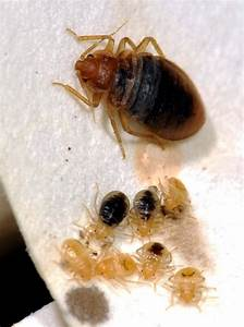 bed bugs crawling on our desks at tucson call center With bed bugs tucson