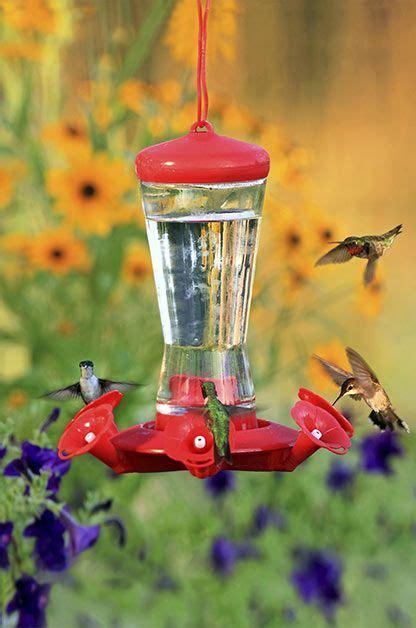 25 best ideas about hummingbird sugar water on pinterest