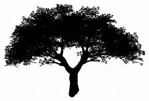 Tree, Stencils