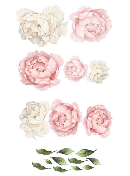 peony flower wall stickers rocky mountain decals