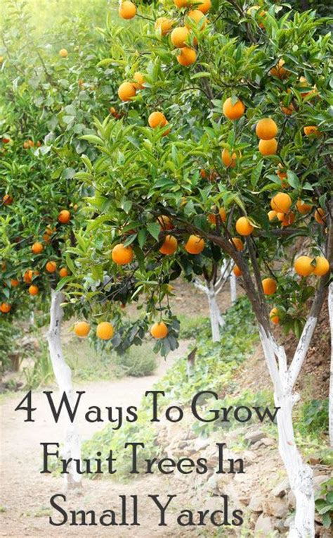Best Backyard Fruit Trees - 25 best ideas about small yards on small