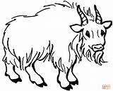 Goat Mountain Coloring Drawing Printables Goats Hairy Printable Clipart Clipartpanda Realistic Popular Coloringhome sketch template
