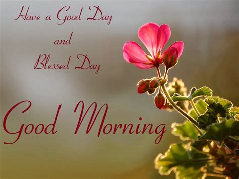 good morning friend pictures images    fun