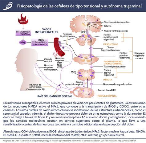 ceffisiopatologia