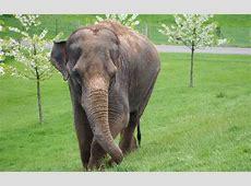 Asian Elephant Wallpaper – Wallpapers9