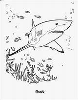 Shark Coloring Pages Printable Sheets Activity sketch template