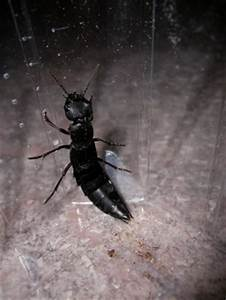Fliegen In Der Erde : hausmittel gegen fliegen in blumenerde obstfliegen ~ Lizthompson.info Haus und Dekorationen
