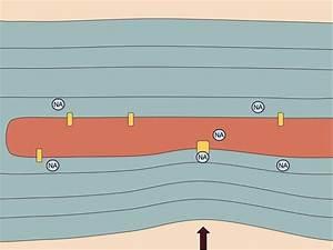 Pacinian Corpuscle Diagram