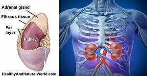 Where Your Kidneys Are Located  U0026 Where Kidney Pain Is Felt