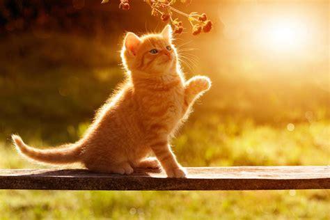 tiere katzen zuechten leichtgemacht  viel aufwand
