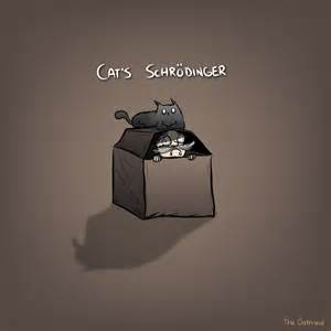schrodingers cat cats schrodinger 171 why evolution is true