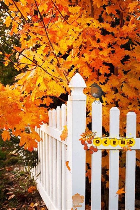 autumn   fence pictures   images