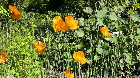 Botanischer Garten Leipzig Parken by Botanischer Garten Leipzig Cool Seltene Cymbidium Sinense