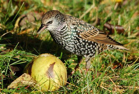 birds 2012 blog it or lose it