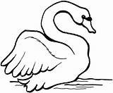Swan Coloring Pages Trumpeter Printable Animals Preschool Print Designlooter Mute Drawings Coloringbay Getcoloringpages Tagged sketch template