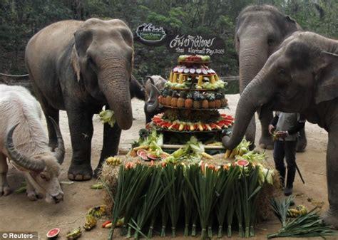 elephant cuisine elephant day chess com