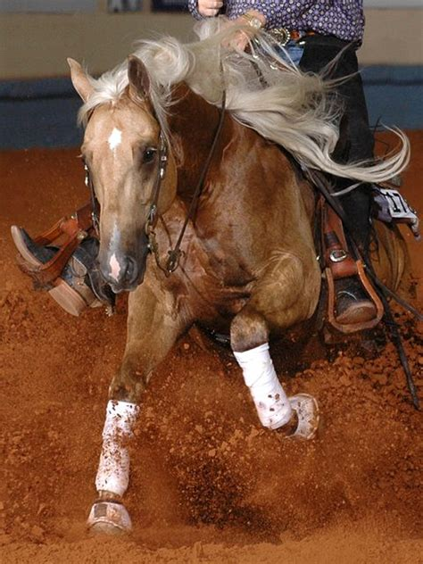 cow horse working horses quarter cutting reining