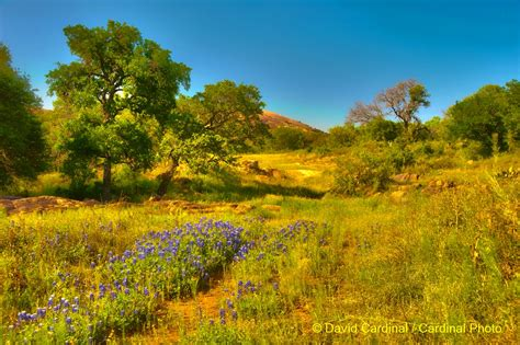 Texas Hill Country Bird Photo Safari & Workshop, May, 2017