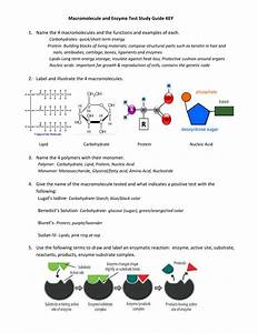 Macromolecule And Enzyme Test Study Guide Key Name The 4