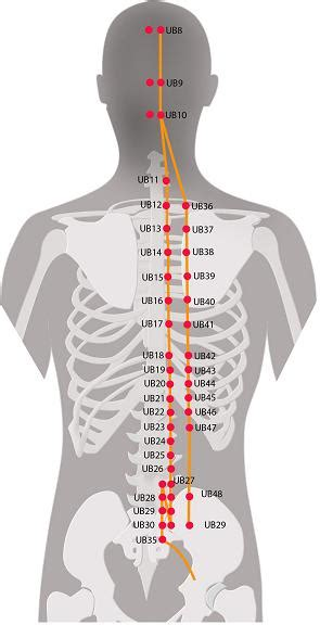 Head Acupuncture Points Chart