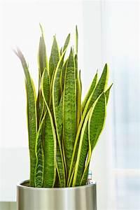 Zimmerpflanzen Für Schlafzimmer : zimmerpflanzen im gleichgewicht das gr ne medienhaus ~ A.2002-acura-tl-radio.info Haus und Dekorationen