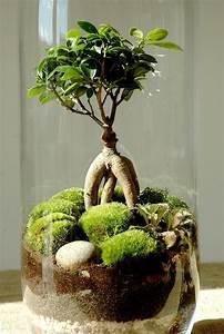 Acheter Terrarium Plante : comment faire un terrarium humide en 8 tapes d tente jardin ~ Teatrodelosmanantiales.com Idées de Décoration