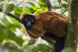 Naturschutzprojekt Masoala Zoo Zrich