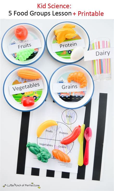 best 25 nutrition activities ideas on science 301 | 57ced6226d0064cbf4258b7b2b920b56 science for kids preschool science