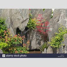 Bonsai China Stock Photos & Bonsai China Stock Images Alamy