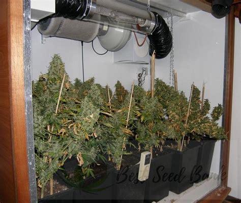 Indoor Grow Closet Setup by Growing Indoors The Easy Way Best Seed Bank