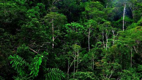 jungle rain wallpapers top  jungle rain backgrounds