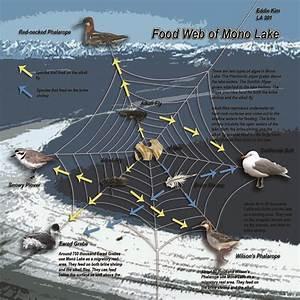 Mono Lake Food Web
