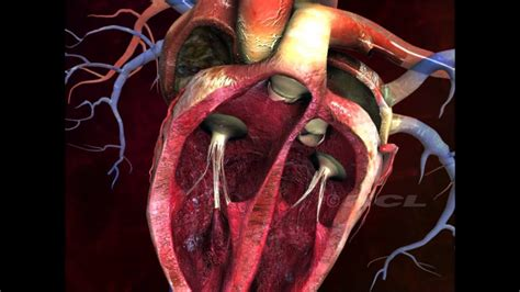 hcl learning digischool structure   human heart