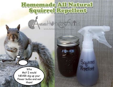 squirrel deterrent for gardens squirrel repellent how to keep squirrels out of your