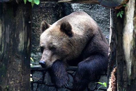 bear pictures pexels  stock