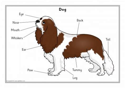 labelled pet animals posters sb sparklebox