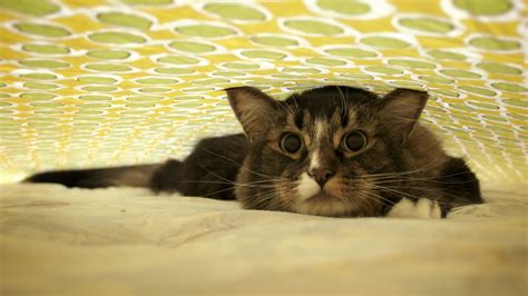 16+ Funny Cats Wallpapers High Quality Download