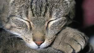 Kann Der Vermieter Katzen Verbieten : katzen die sprache der katzen katzen haustiere natur planet wissen ~ Buech-reservation.com Haus und Dekorationen