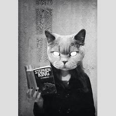 Pin By Ann Caulfield On Get Lost In The Pages(glasses) In 2019  Cats, Cat Reading, King Book