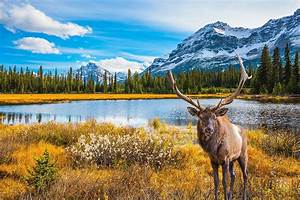 Flights from Canada - Get United's Best Fares Today ...  Canada