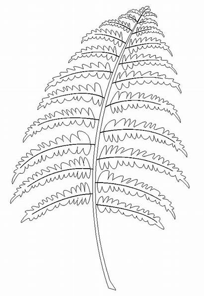 Fern Coloring Pages Maple Pine