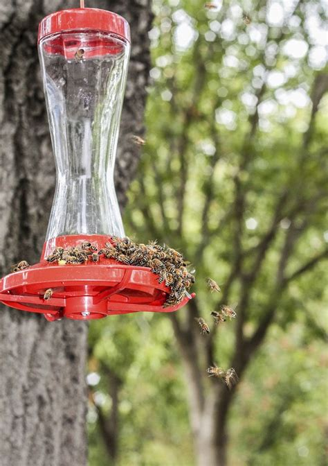 tips for keeping bees away from hummingbird feeders
