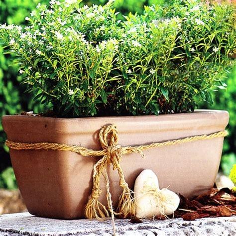moka clay rectangle window box garden planter